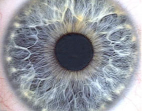 Picture of the Iris of a human eye