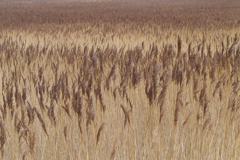 Reed Tableau 6x4
